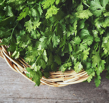 Why some love coriander and others don't